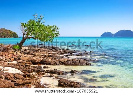 Tropical stone beach arainst blue sky - stock photo