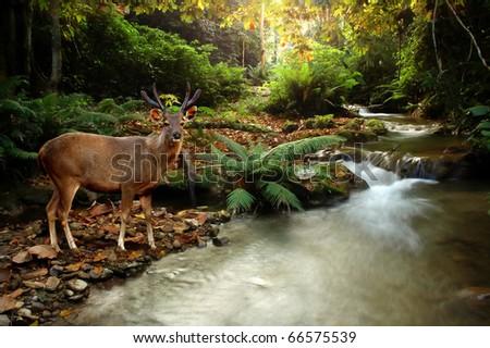 tropical stream and sambar deer - stock photo