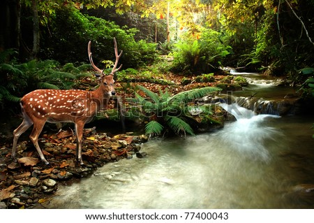 tropical stream and sika deer - stock photo