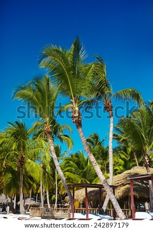 Tropical summer beach with palm leaf tree branch  sea and sky background