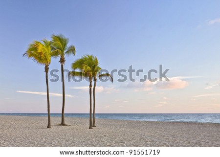 Tropical summer paradise in Miami Beach Florida with palm trees and ocean in the background in early morning - stock photo