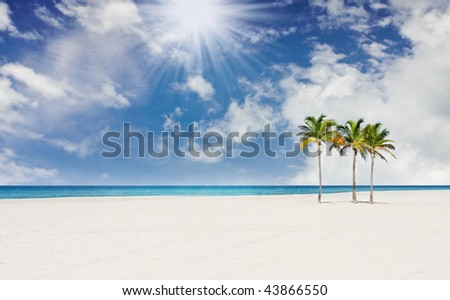 Tropical sunny beach paradise in Miami Florida with palm trees on  pristine sands with blue sky and ocean in the background - stock photo