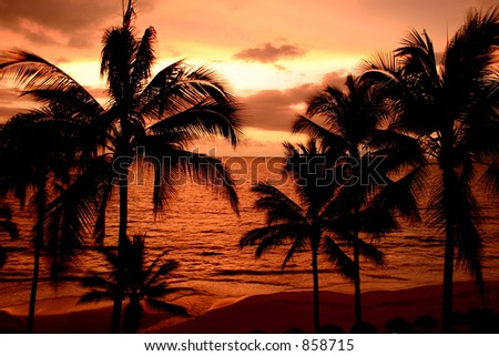 Tropical sunset - stock photo