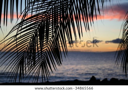 tropical sunset through palm leaves - stock photo