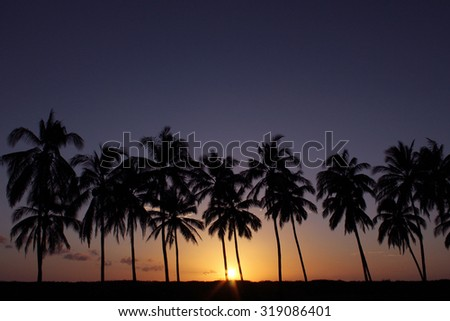 Tropical sunset with palm trees in silhouette. Photographed near Playa Junquillal Costa Rica on Jan 4, 2015. - stock photo