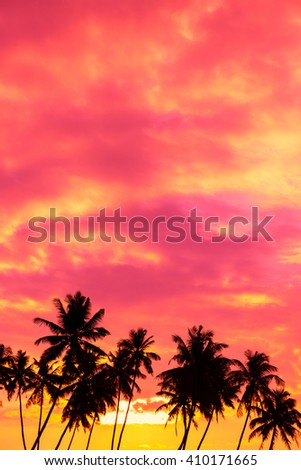 Tropical sunset with palm trees silhouettes and sky for copy space - stock photo