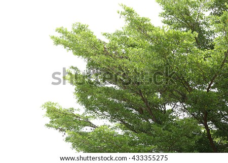 Tropical tree isolated on white background for decorated idea natural design.