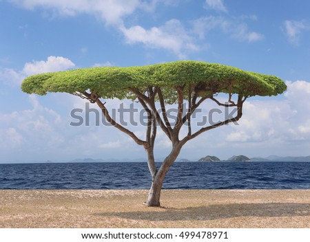 Tropical tree of Manila tamarind on the beach and have sea and sky in the background.