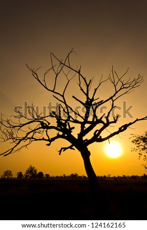 tropical tree with sunrise background