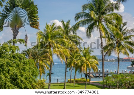 Tropical trees by the seaside