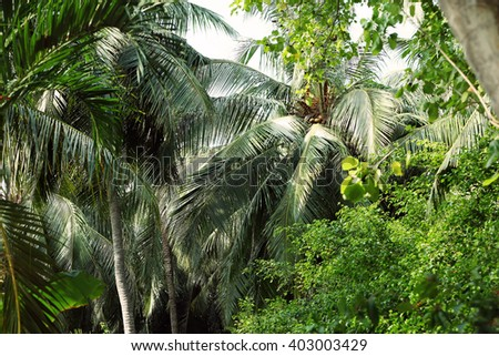 Tropical trees in an exotic forest.
