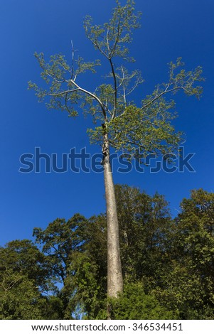 Tropical trees isolated on a blue sky background