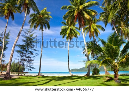 Tropical trees on green grass near the sea. Exotic summer holidays - stock photo