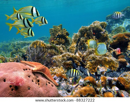Tropical underwater landscape with colorful fish in a thriving coral reef of the Caribbean sea - stock photo