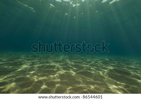 Tropical underwater life in the Red Sea. - stock photo