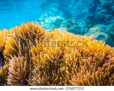Tropical underwater life in the Sea.Thailand - stock photo