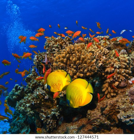 Tropical Underwater Template Beautiful Coral Reef Stock Photo ...