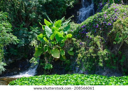 Tropical vegetation - stock photo