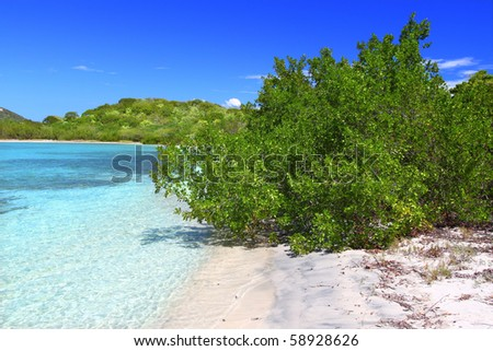 Tropical vegetation along a picturesque beach in the British Virgin Islands - stock photo