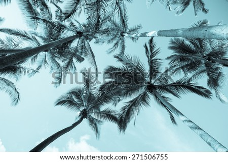 Tropical Vintage image, palms towering above skyward. - stock photo