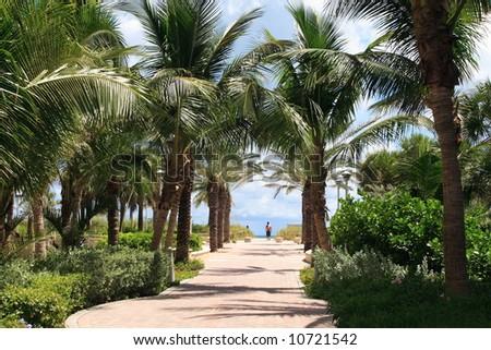 Tropical walkway to south beach - stock photo