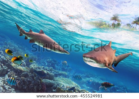 Tropical water with dangerous bull sharks - stock photo