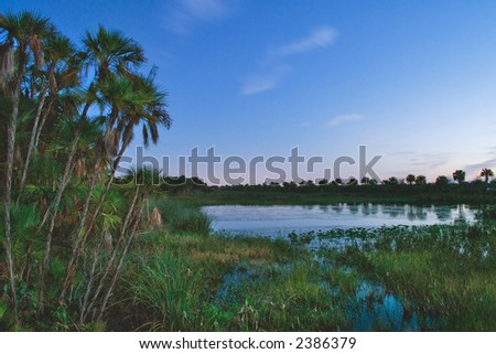 tropical wetland predawn as background - stock photo