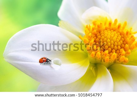 Tropical white flower yellow stamens ladybug stock photo image tropical white flower with yellow stamens ladybug and transparent drop of water on a green mightylinksfo