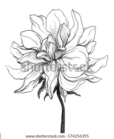 blooming lotus dragonfly sitting on leaf stock illustration 367152518 shutterstock. Black Bedroom Furniture Sets. Home Design Ideas