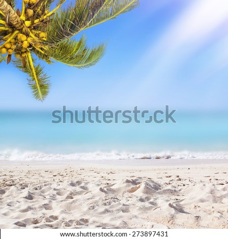 Tropical white sand beach background. Sunshine, coconut palm tree and ocean.  - stock photo