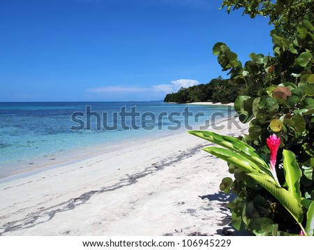 Tropical white sand beach with clear water of the Caribbean sea and a red ginger flower in foreground, Bocas del Toro, Panama - stock photo