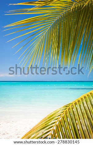 Tropical white sand beach with coconut palm trees, seaview. Mexico, Isla Mujeres.  - stock photo