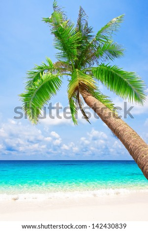 Tropical white sand beach with palm tree. Koh Kood, Thailand