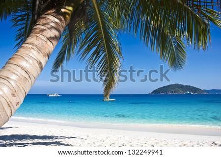 Tropical white sand beach with palm trees. Similan islands, Thailand, Phuket. - stock photo