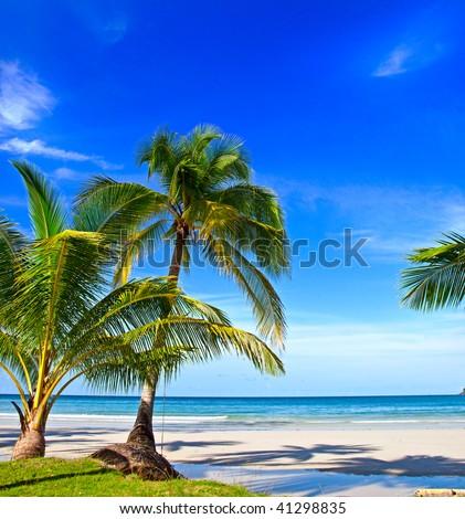Tropical white sand virgin beach - stock photo