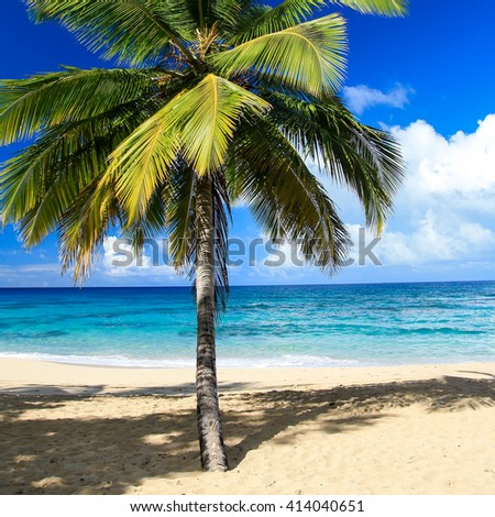 Tropical white sandy beach with coconut palm tree, seaview - stock photo