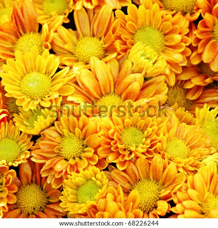 Tropical Yellow Flowers