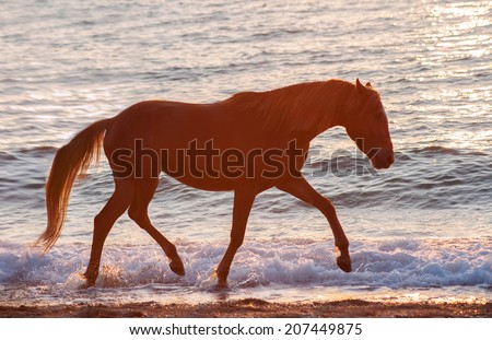 Trotting horse runs along the crest of the waves against the sunset sea. Horse silhouette on a background of water - stock photo