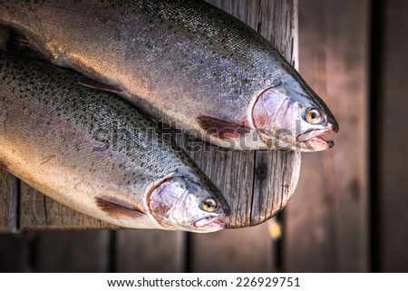 trout area fishing - stock photo