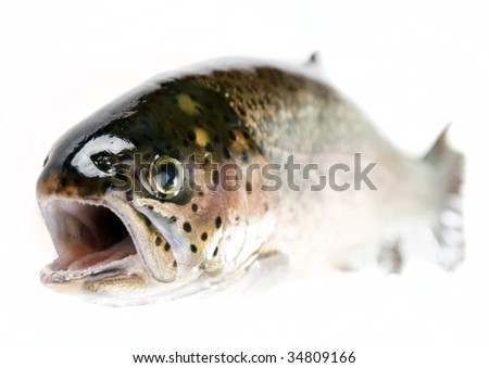 Trout fish isolated on white - stock photo