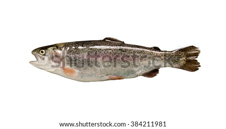 Trout fish isolated over white background - stock photo