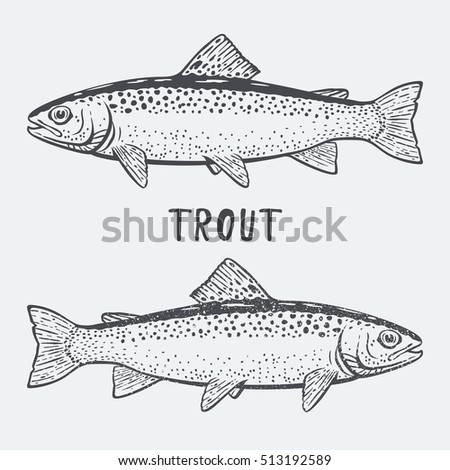 Trout fish sea live black and white illustration