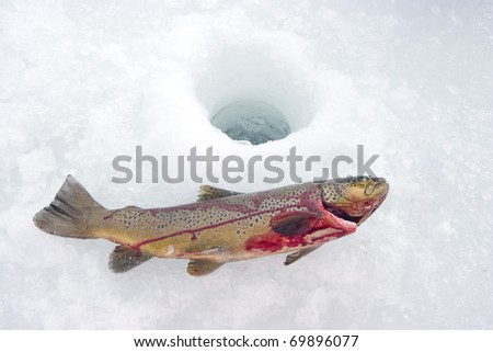 Trout Icefishing - stock photo