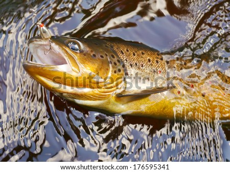 Trout on fishing line in dark stream - stock photo