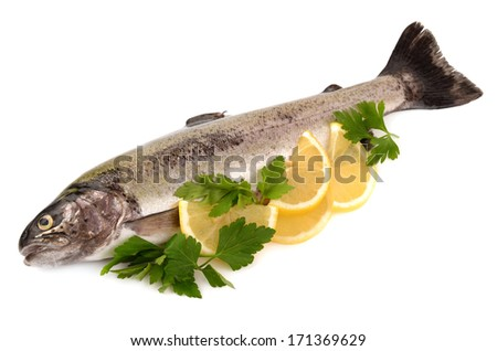 trout on white background