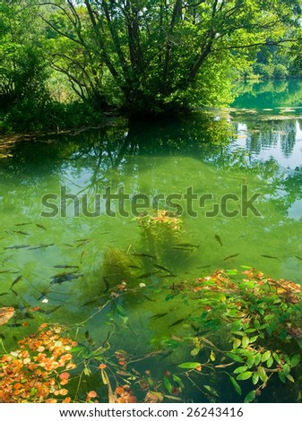 Trouts swimming in forest river - stock photo