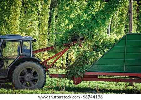 Truck harvesting the Hop - stock photo