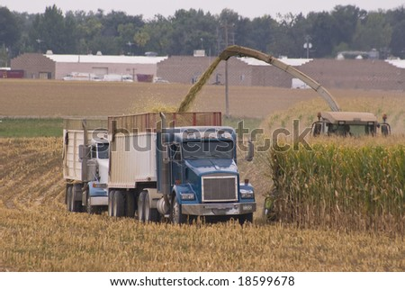 Trucks line up to haul the corn as it is chopped in the field. - stock photo