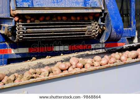 Trucks unload their load of potatoes onto a conveyor belt at a packing facility - stock photo