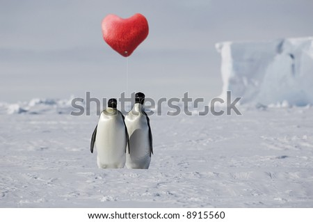 True penguin love - stock photo